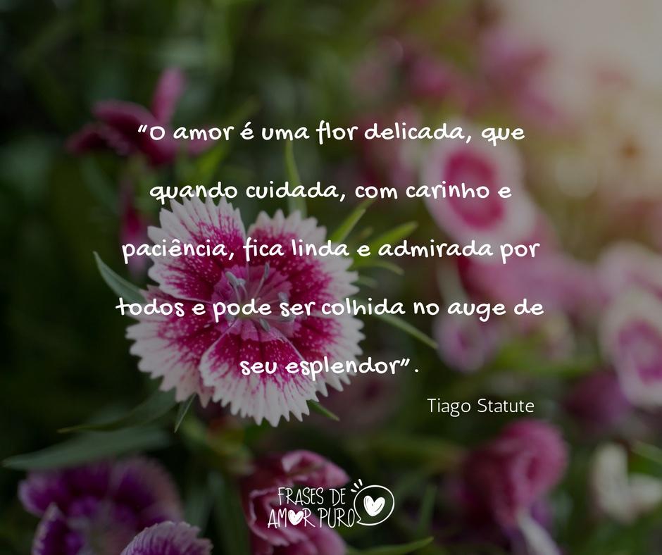 O Amor é Uma Flor Delicada Frases De Amor Puro